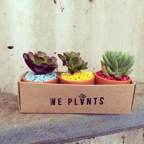 we plants